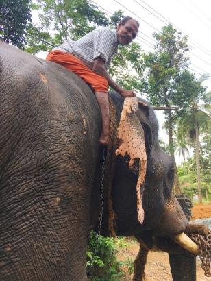 kerala_elephant_ync